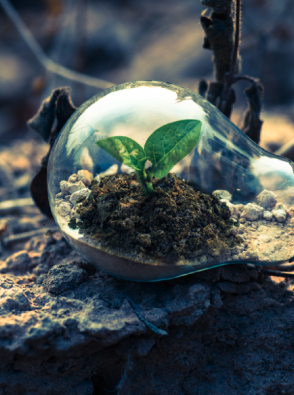5 ways your business can be more eco-friendly